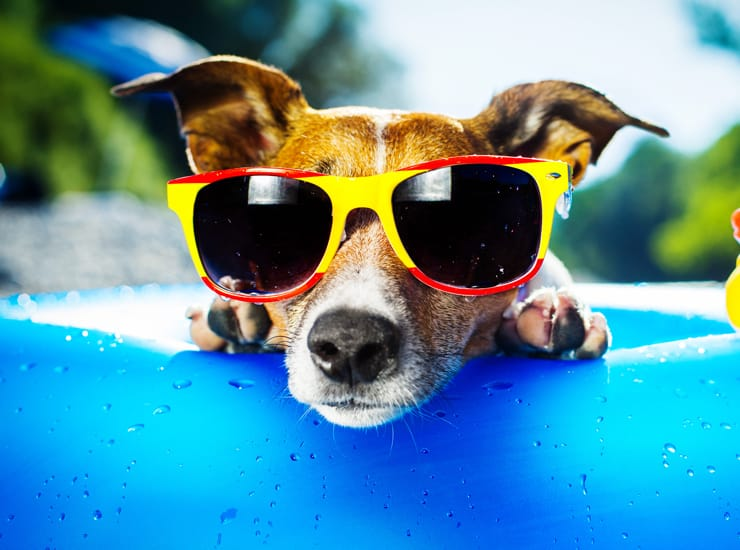 What to Do with your Dog When on Vacation