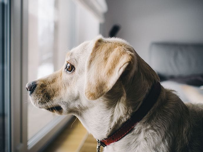 6 Solutions To Help Your Dog With Separation Anxiety