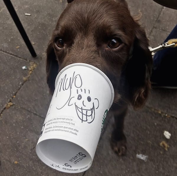 dog licking starbucks coffe