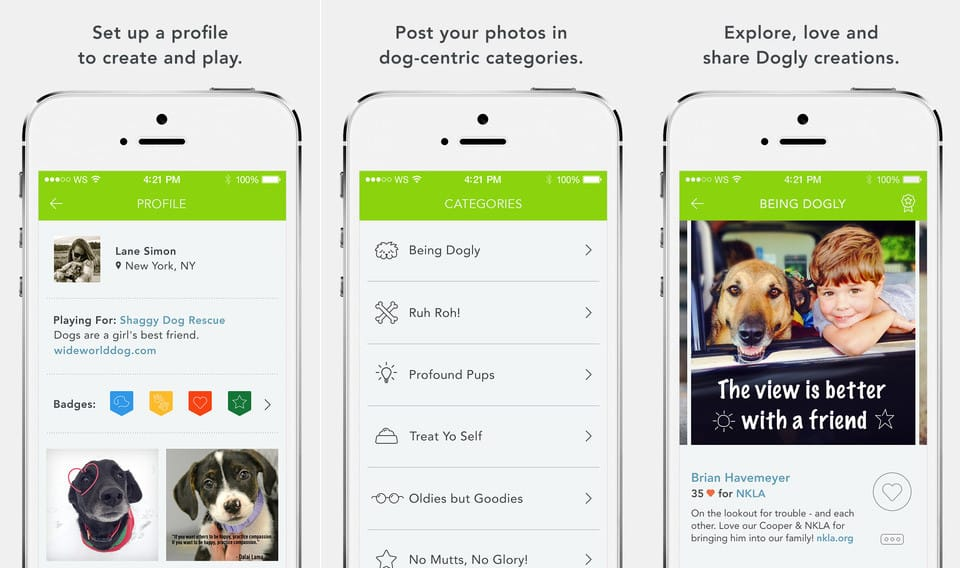 a view of the pet shelter app Dogly