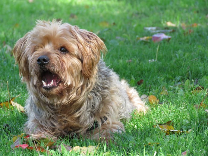 how to stop barking dog