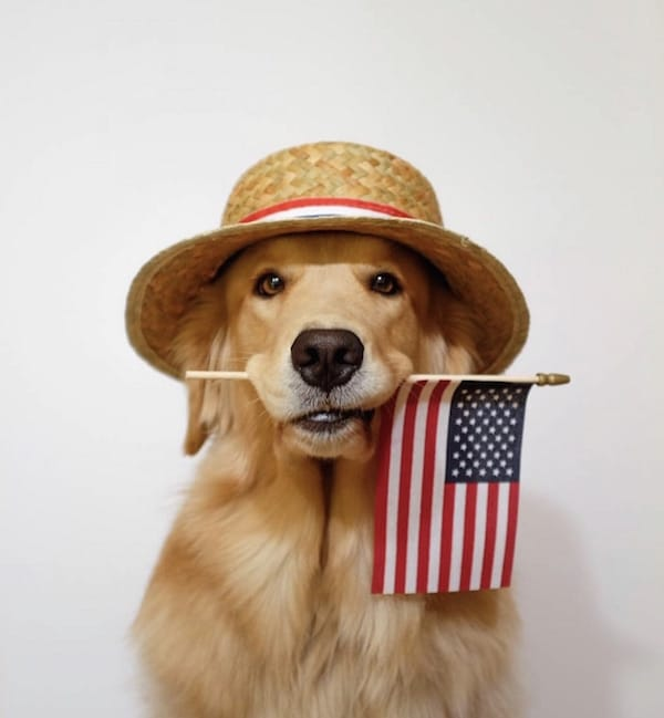 dog with a flag