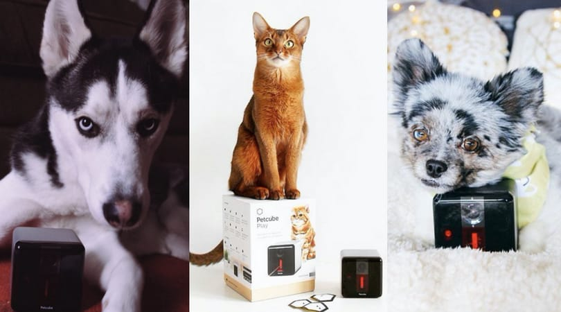 Pets and Petcube