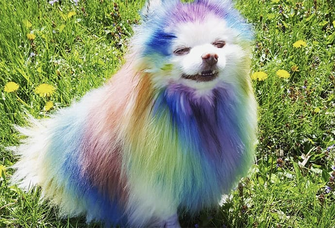 10 Dogs Who are Totally Ready for Pride Month