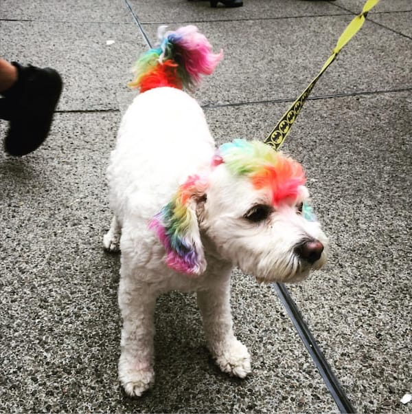 pride dog from head to tail