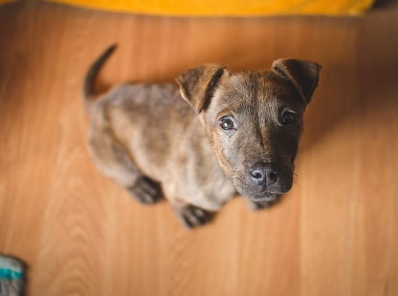 How to Discipline a Puppy Without Punishment