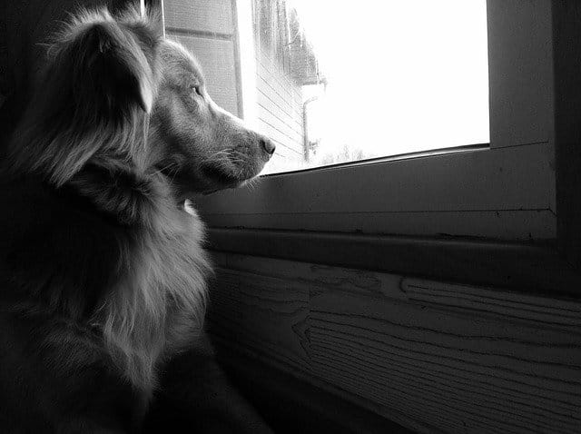 How to Help a Dog With Separation Anxiety - 10 Easy Steps