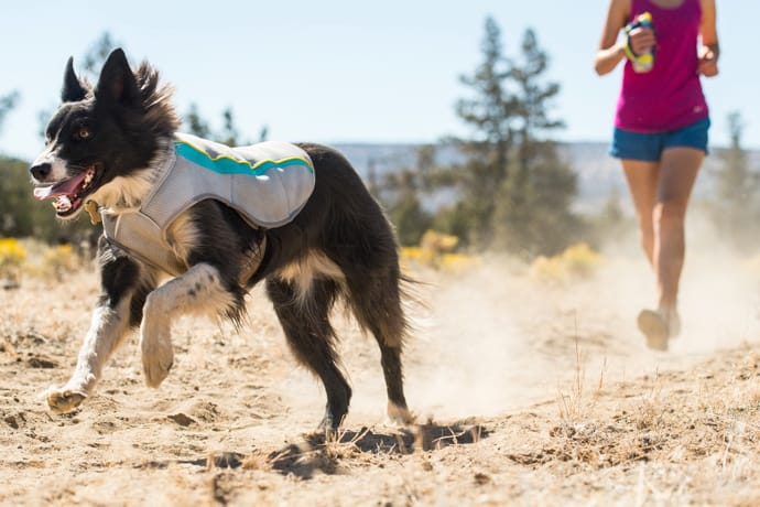 Ruffwear Swamp Cooler for Dogs