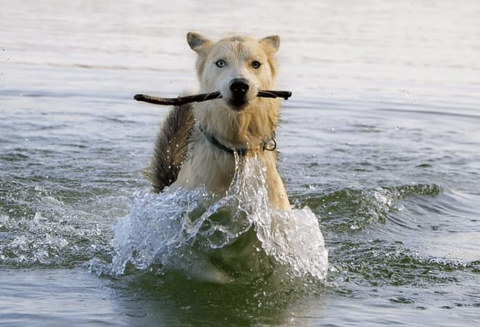 Beat the Heat: How to Keep Your Pet Cool This Summer
