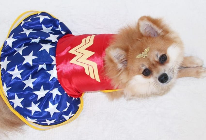 12 Dogs Who are Just as Into Wonder Woman as us