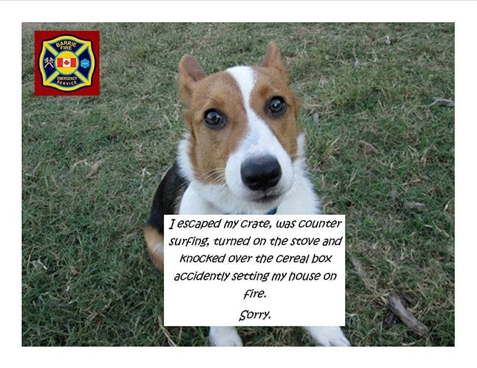 Barrie Fire And Emergency Service Post With A Dog Arsonist