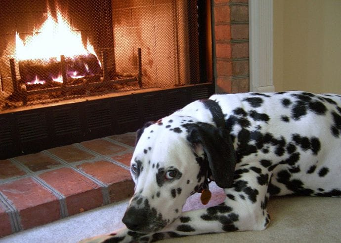 A Dalmatian is near the fireplace