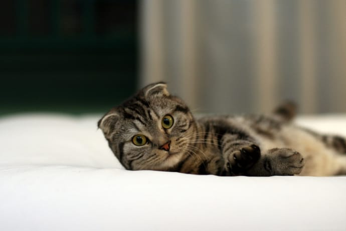 Cat laying on a bed