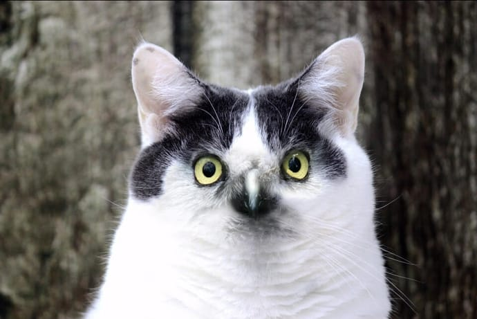 Cat with Eagle Eyes