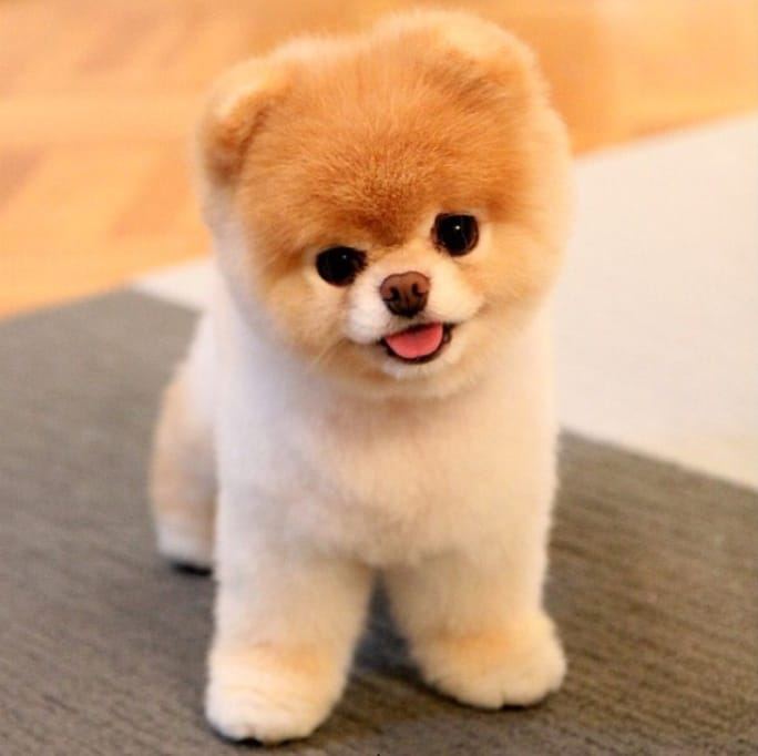 Cute Doggie haircut