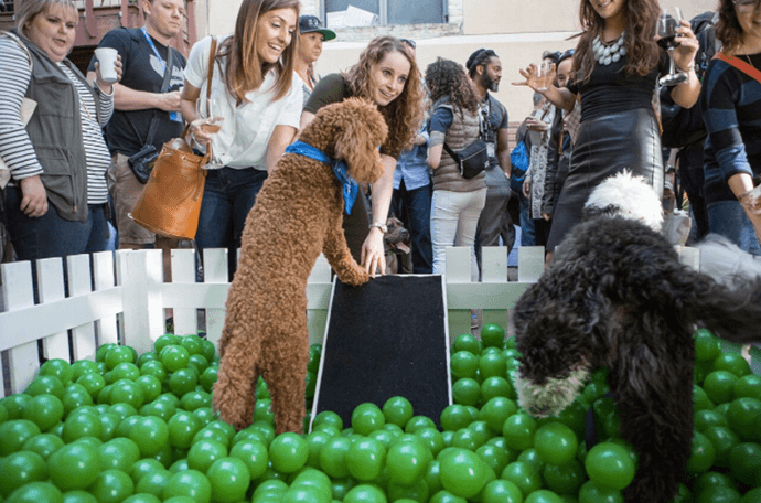 Dogs playing in the pool filled with plastic balls