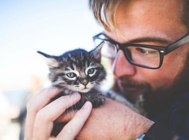 Kitten Care 101 - How to Take Care of a New Kitten