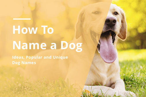 How to Name a Dog: Unique Male & Female Dog Naming Ideas