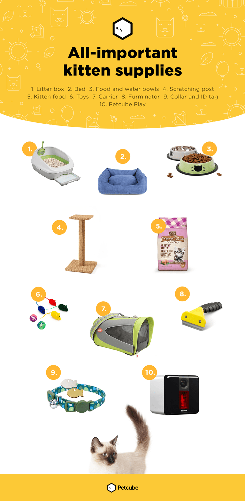 Kitten Supplies Infographic