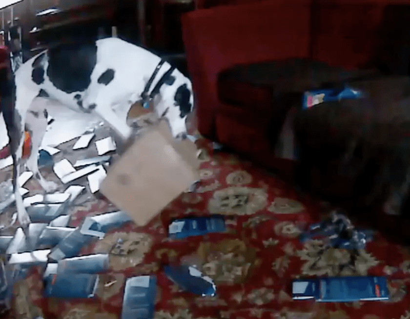 These Funny Dogs Were Caught on Hidden Pet Cam