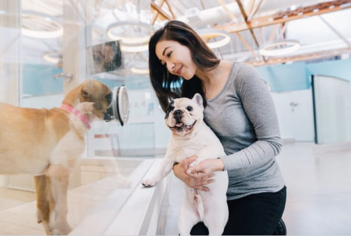 Manny the Frenchie and Amber Chavez