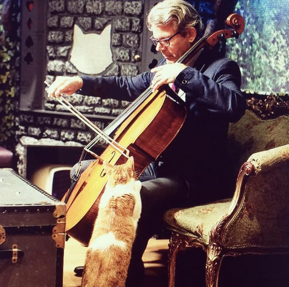 Cat and Double bass