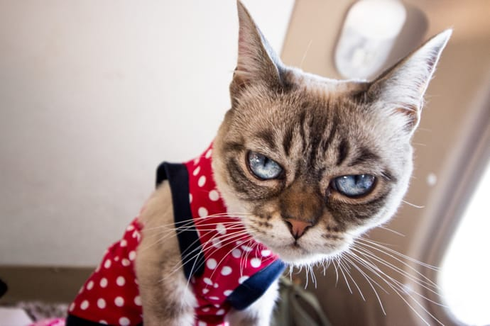 Twitchy Kitty Syndrome: Why Some Kitties Wear Clothes