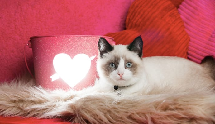 For Valentine S Day Cat Toys : Best valentine s day gifts to share with your pet