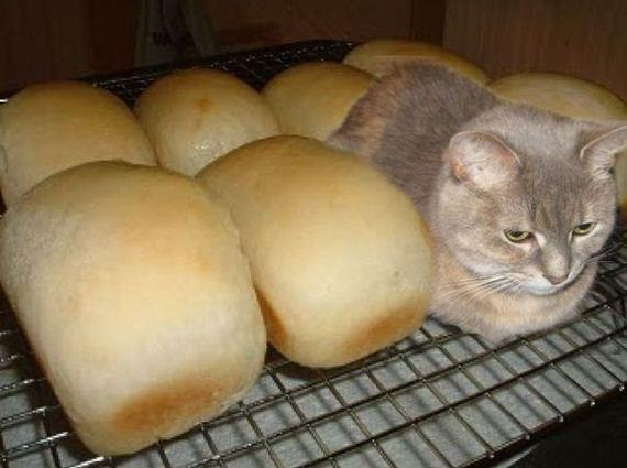 Cat Loafing