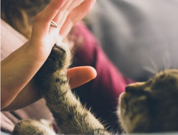 [Quiz] Does Your Cat Really Love You?