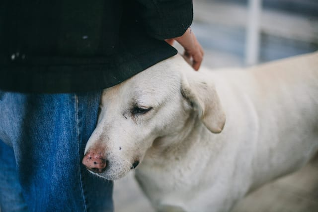 Top Tips For Dog Separation Anxiety From Pet Experts