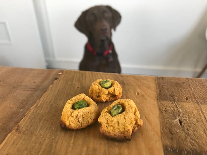 Doggy Treats Recipe