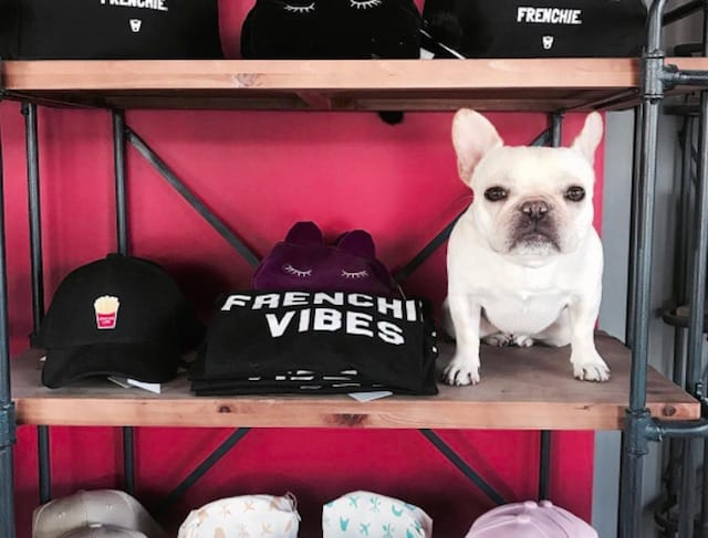 Frenchie fashion