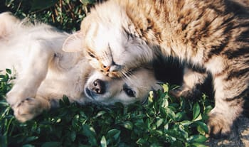 19 Interesting Facts About Senior Pets