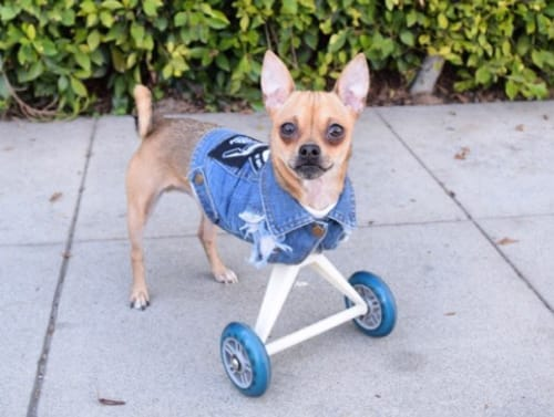 8 Special Dogs To Inspire Your Instagram Feed