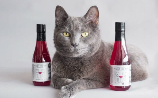 Gift Guide 12 Gifts For Cat Ladies
