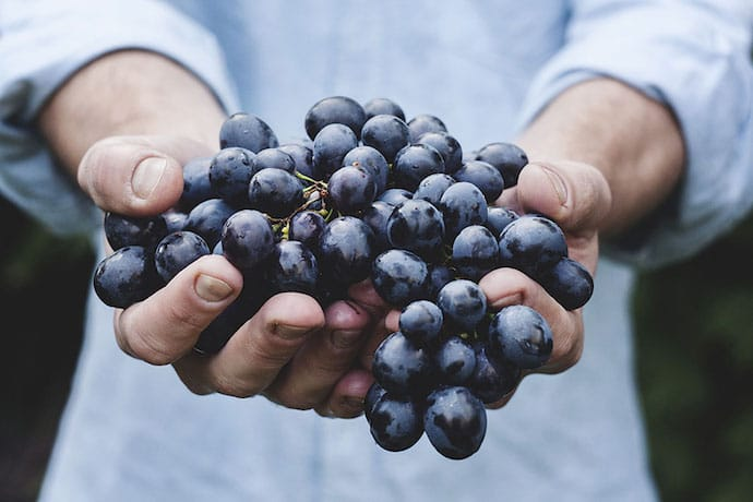 human hands holding grapes