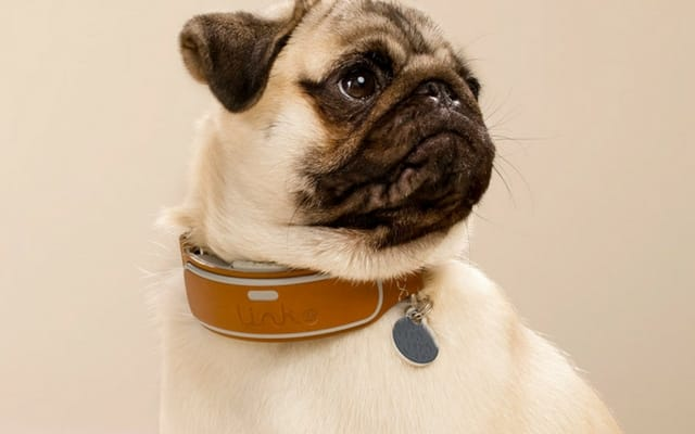 A GPS dog collar LinkAKC