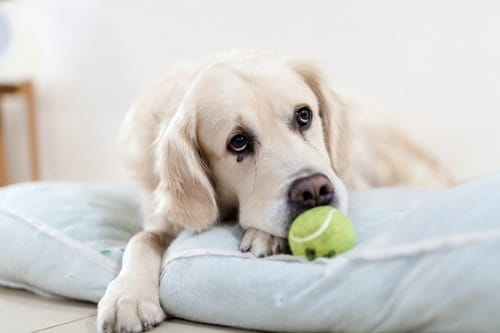 Essential Dog Training Tools For Behavior, Agility and Intelligence
