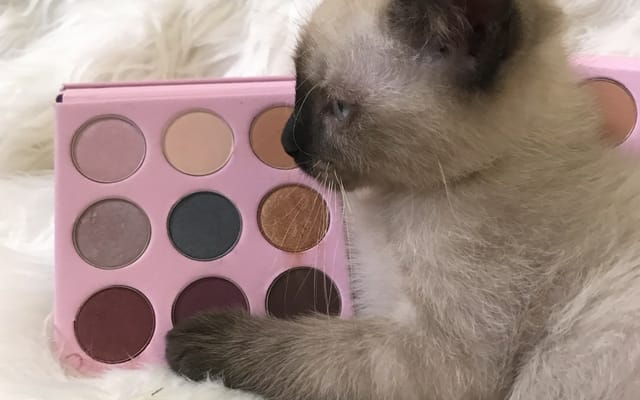 cat and makeup