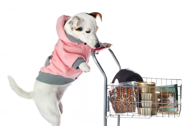 4 Can't-Miss Holiday Deals For Pet Lovers