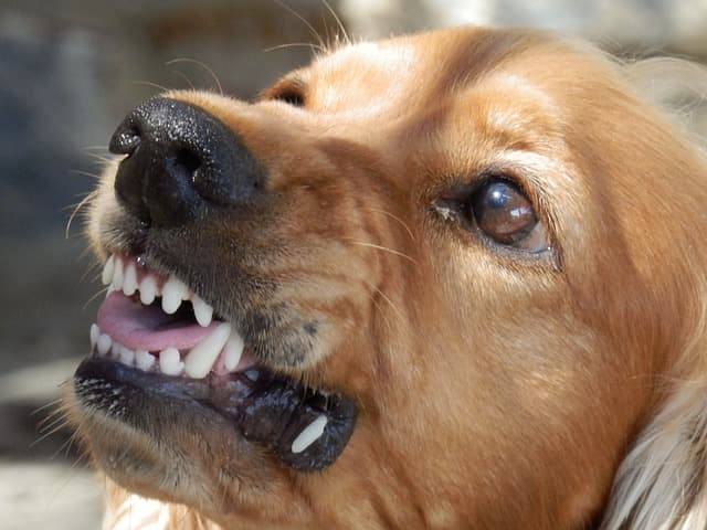 Image result for Aggressive Behavior in dogs