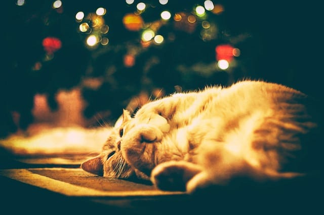 cat sleeping under christmas tree