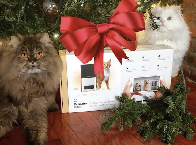 8 Steps To Cat Proof And Dog Proof Your Christmas Tree