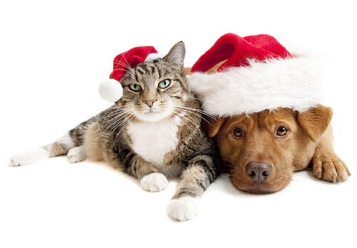 19 Purrfect Pet Gifts This Holiday Season