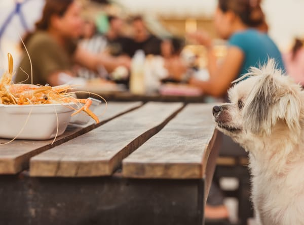 Can Dogs Eat Seafood? Benefits and Risks