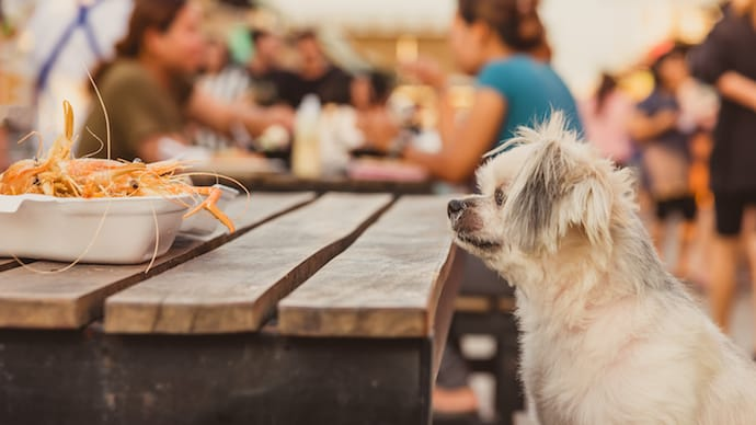What Types Of Seafood Can Dogs Eat Risks Safety And Benefits