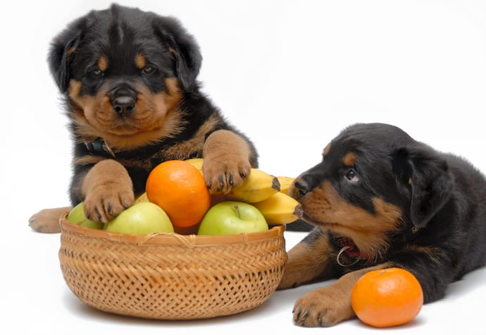 puppies and fruits