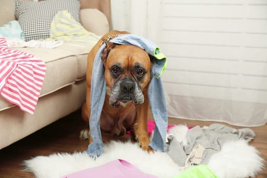 5 Ways To Dog-Proof Your House