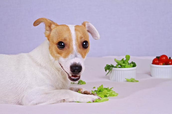 Dog With Lettuce